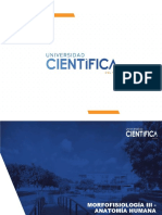Anatomía - práctica 3.pdf