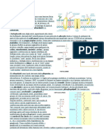 Cap. 7 Membrana plasmatica.docx