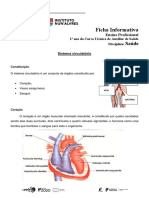 Ficha informativa sistema circulatório