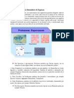Protozoos formadores de esporas microbiologia.docx
