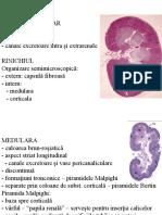 Histo curs 6b