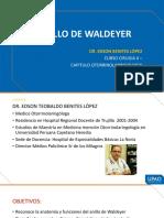Mehu108_U2_T1_ANILLO DE WALDEYER