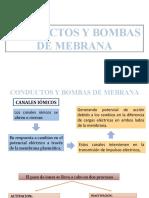 Conductos y bombas de membrana.pptx