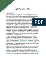 Las plantas pteridofitas