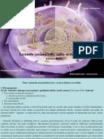 2. Leziunile (acumulările) intra- şi extracelulare reversibile_4.pdf