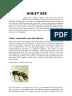 Honey bees and life cycle of silk moth