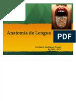 docdownloader.com-pdf-anatomia-de-lengua-dd_4632afc598e3817a25e01e8ca1f6407c