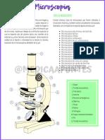 Microscopia Imagen