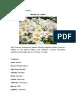 Album de Flora y Fauna