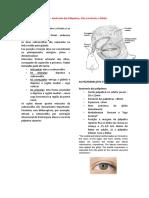 Aula 1 – Anatomia das Pálpebras^J Vias Lacrimais e Órbita
