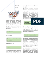 CARBOHIDRATASAS_Ficha(f).docx
