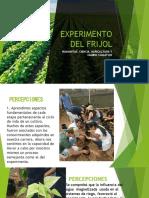 EXPERIMENTO DEL FRIJOL.pptx