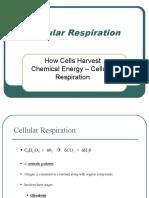 Cellular Respiration.ppt