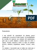 sementeira