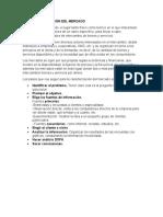 INFORME DESCRIPCIÓN DEL MERCADO (FORO)