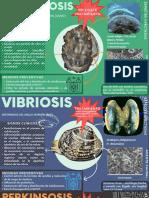 Enfermedades de moluscos- infografía