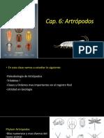 Cap-6-artrópodos