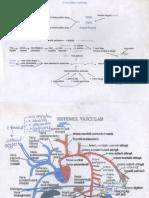 sistemul-vascular-3-foi.pdf