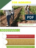 sector agrario