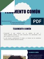 1.4. Tegumento común(1)