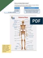 Cómo es el sistema Óseo humano.pdf