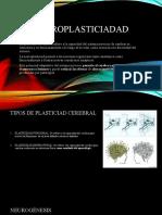 clase 2 Neurodesarrollo- Bobath