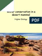 Water conservation in a desert mammal