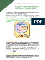 expresión del código genético  transcricpción y traducción