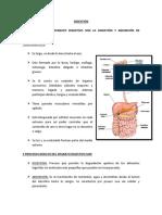 RESUMEN DIGESTIÓN PDF.pdf