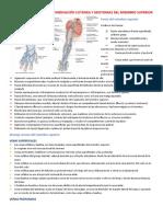 Miembro Superior  Fascias, Vasos Eferentes, Inervación Cutánea Y Miotomas Del MS Completo