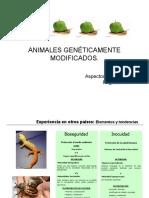 Animales transgenicos Patricia Tovar