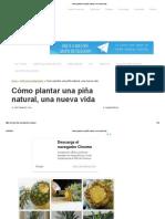Cómo plantar una piña natural, una nueva vida