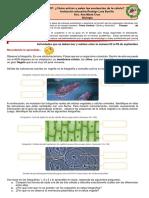 Guía de aprendizaje transporte celular