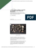 Fósseis ajudam a explicar a ascensão dos mamíferos após extinção de dinossauros - Revista Galileu _ Arqueologia