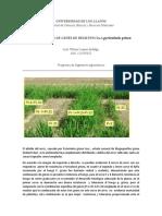 genes de resistencia arroz.docx