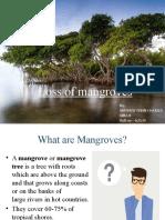 Mangroves - MATHEW FEBIN CHARLES.pptx