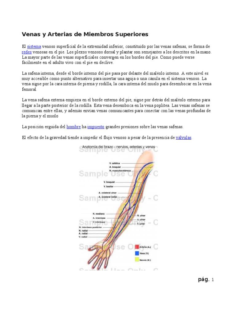 Venas y Arterias de Miembros Superiores