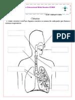 sitema respiratorio