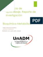 RUTAS METABOLICAS REPORTE DE INVESTIGACIÓN