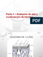 Anatomiaycicatrizacion