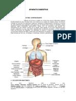 sistema digestivo - biologia (1)