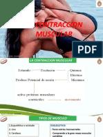 2° CONTRACCION MUSCULAR
