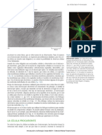 lectura célula procariota.pdf
