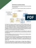 Apuntes - GENERALIDADES DE LOS ÓRGANOS LINFOIDES