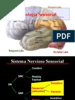 fisiologia-sensorial .pptx
