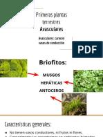 Primeras_plantas_terrestres_Avasculares.pdf