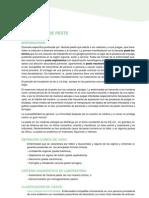 25_PROTOCOLO_PESTE_CMP