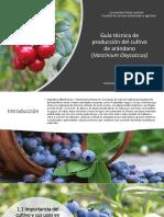 presentacion arandano.pdf