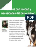 AV_34_Edad_y_necesidades_del_perro_mayor