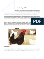 Gallina_Negra_INTA